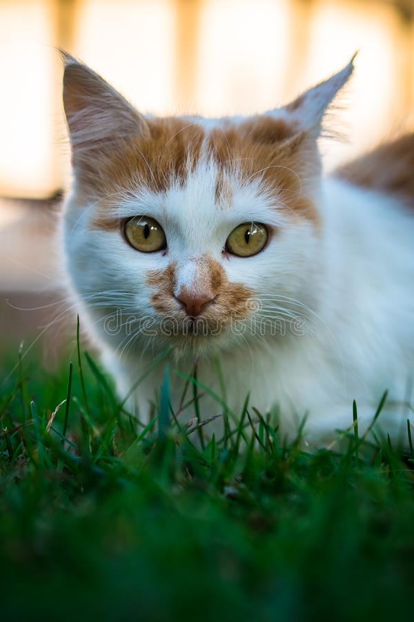 Cat, Whiskers, Green, Fauna royalty free stock images
