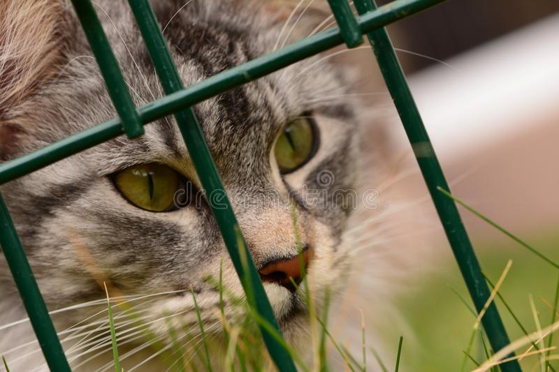 Cat, Whiskers, Green, Fauna stock photography