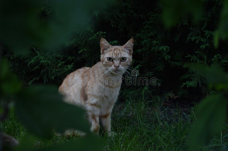 Cat, Whiskers, Green, Fauna stock images
