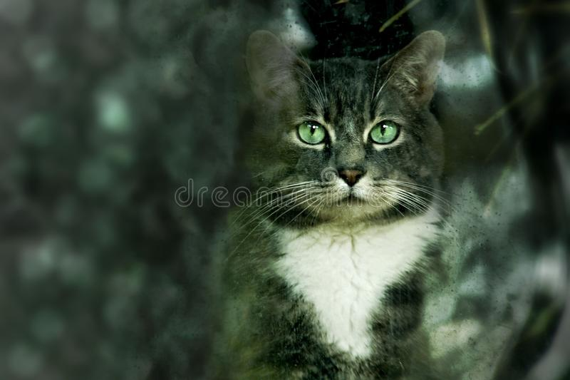 Cat, Whiskers, Green, Mammal royalty free stock photography