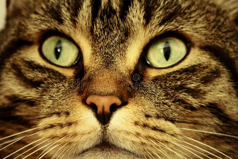 Cat, Whiskers, Mammal, Eye Free Public Domain Cc0 Image