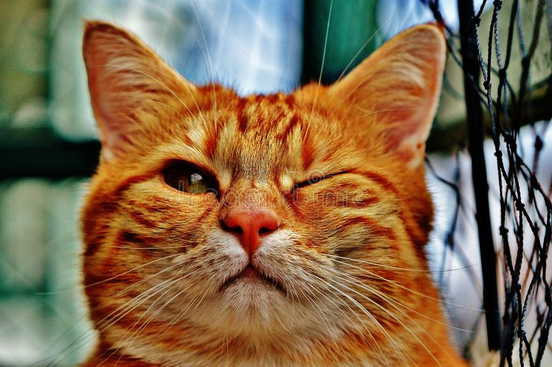 Cat, Whiskers, Small To Medium Sized Cats, Fauna royalty free stock photos