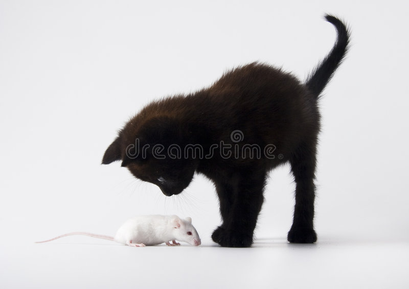 Cat & White mouse. Cat - the small furry animal with four legs and a tail; people often keep cats as pets stock image