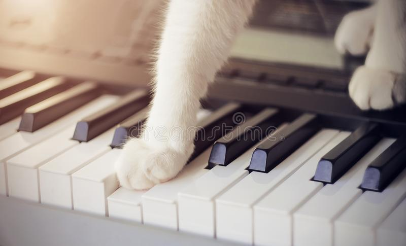 Cat with white paws presses one paw on the key on the musical synthesizer, making a sound royalty free stock photos