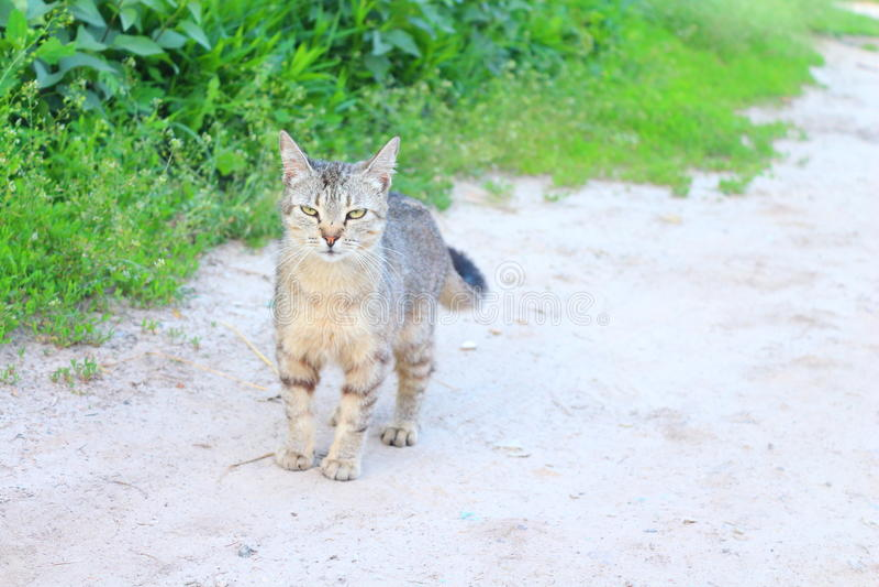 Cat who walks alone royalty free stock photos