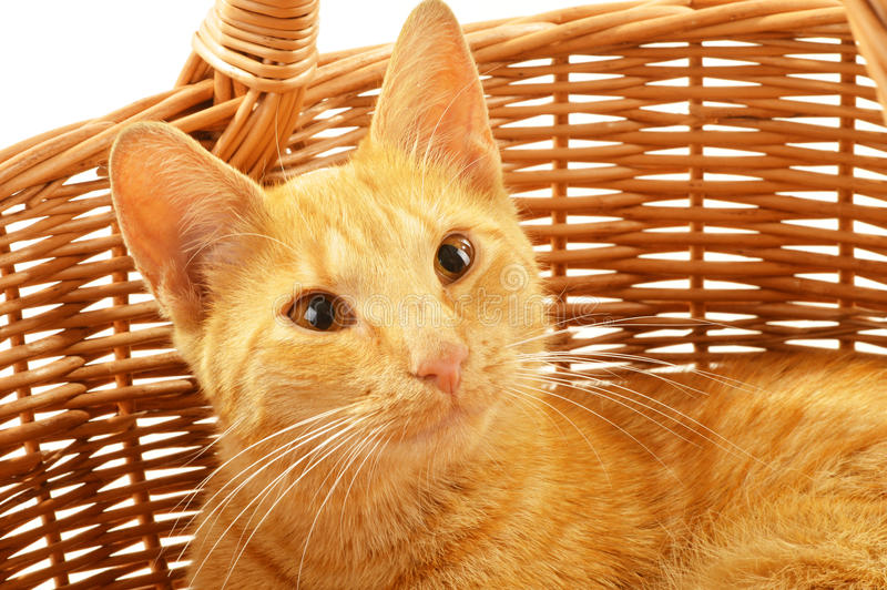 Download Cat in wicker basket stock image. Image of basket, mammal - 25948489