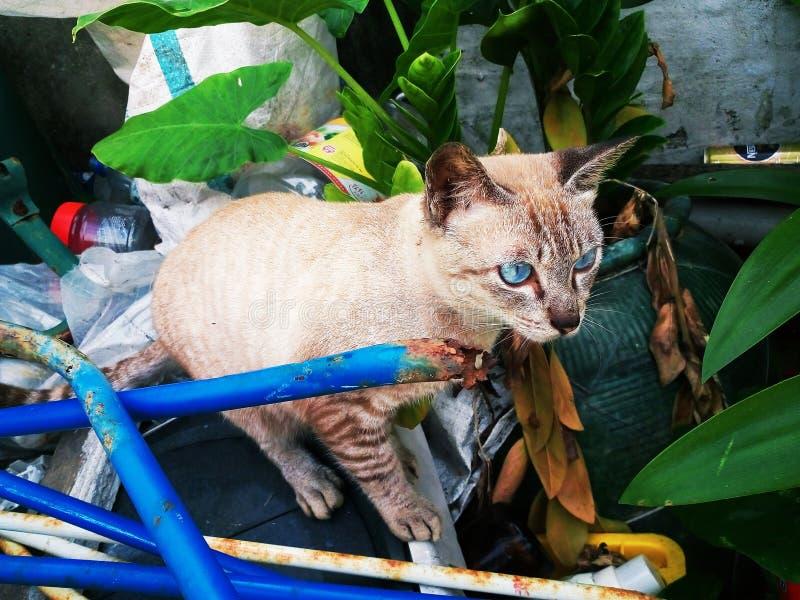 Cat in the wild stock image