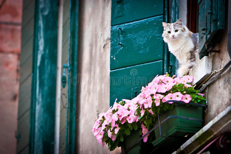 Cat In The Window Stock Photos