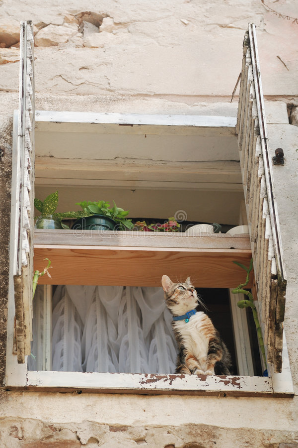 Cat sitting in open window. Cat sitting on window sill of open window looking up stock photography