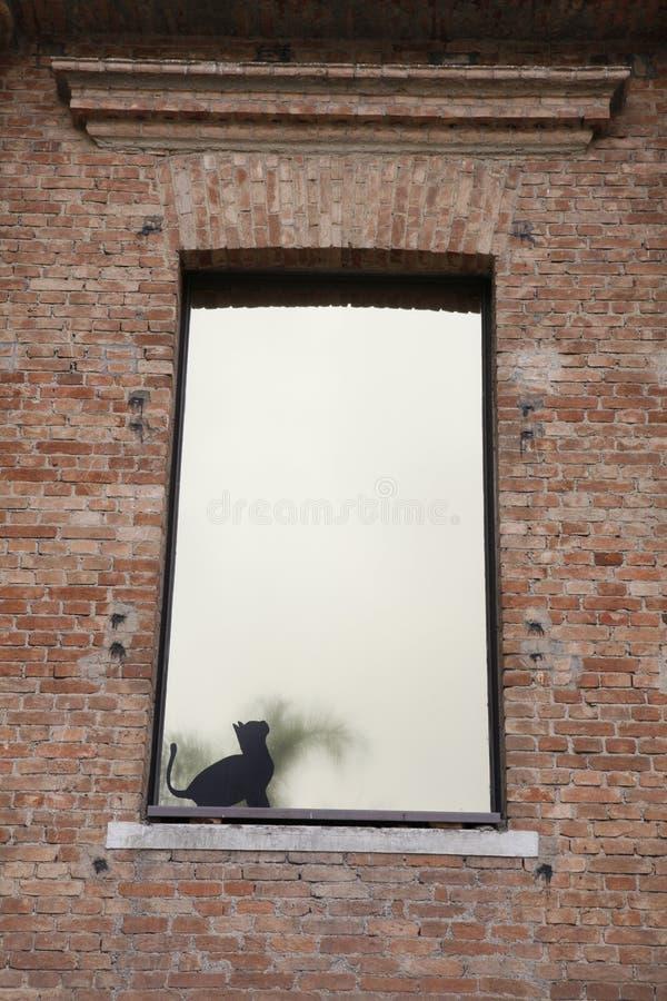 Download Cat in window stock photo. Image of feline, looking, reflex - 27495982
