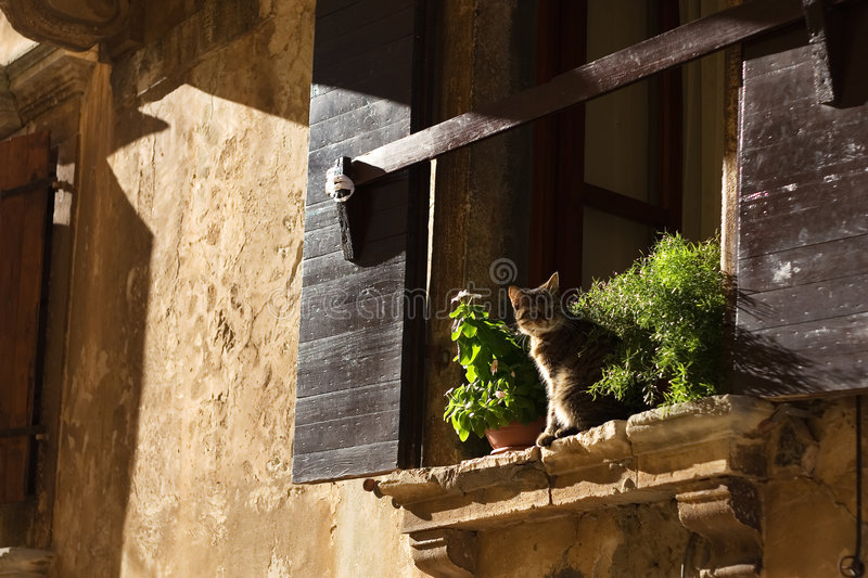Download Cat on window stock photo. Image of aspect, village, perspective - 3589458