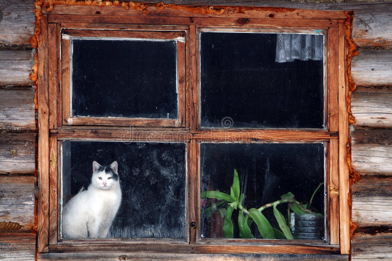 Cat in window. Traditional country side in Latgale, Latvia royalty free stock images