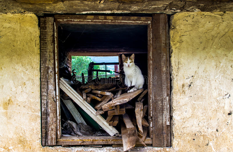 Cat Window photos libres de droits