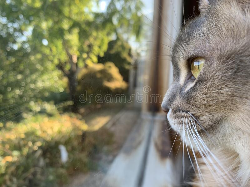 Cat in window royalty free stock photo