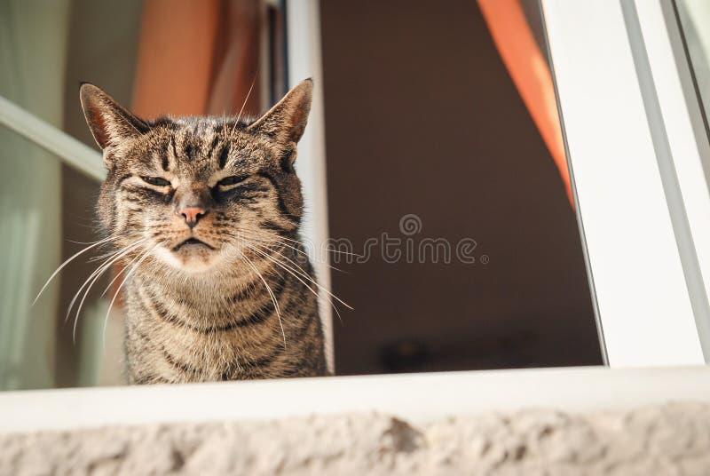 Cat by a window. Relaxing cat looking outside sitting near window stock photo