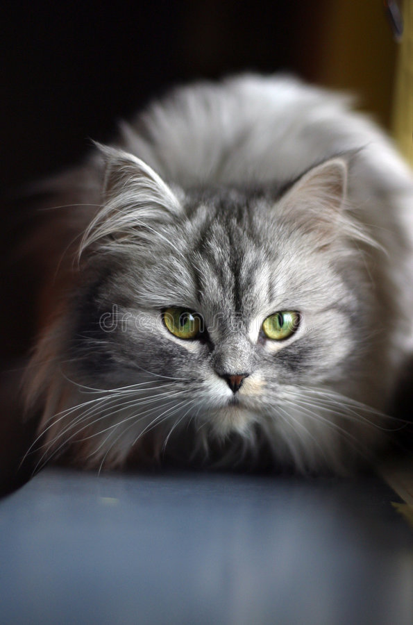 Download Cat on a window sill stock image. Image of observes, hunting - 628837
