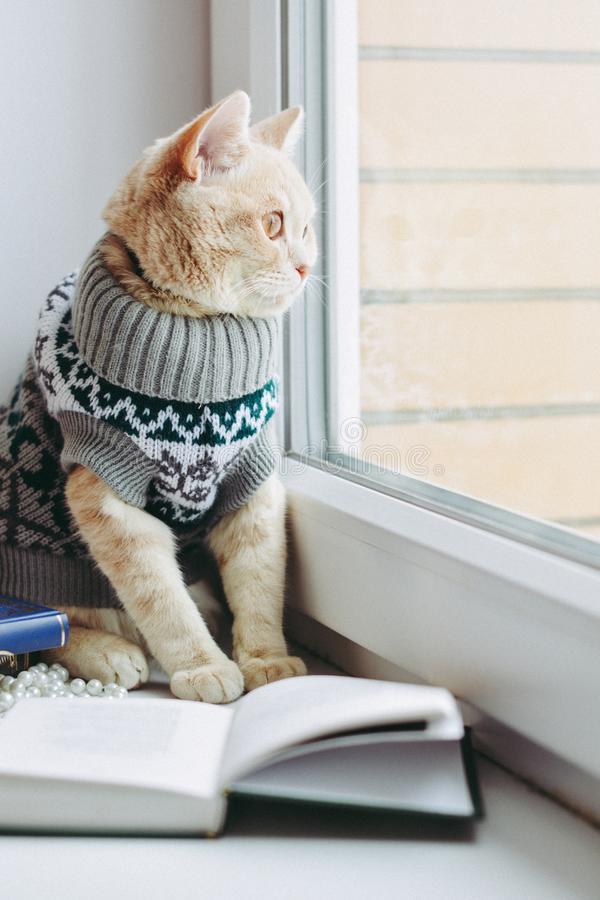 Cat on the windowsill sits and looks out the window royalty free stock photography
