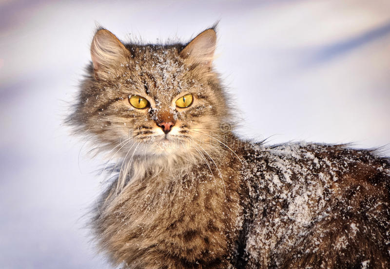 Download Cat in winter stock image. Image of portrait, cuddly - 31725753