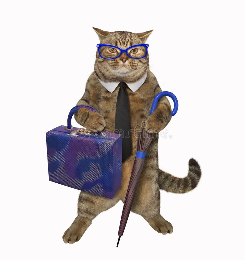 Free Cat With Bag And Umbrella 2 Royalty Free Stock Image - 183665916