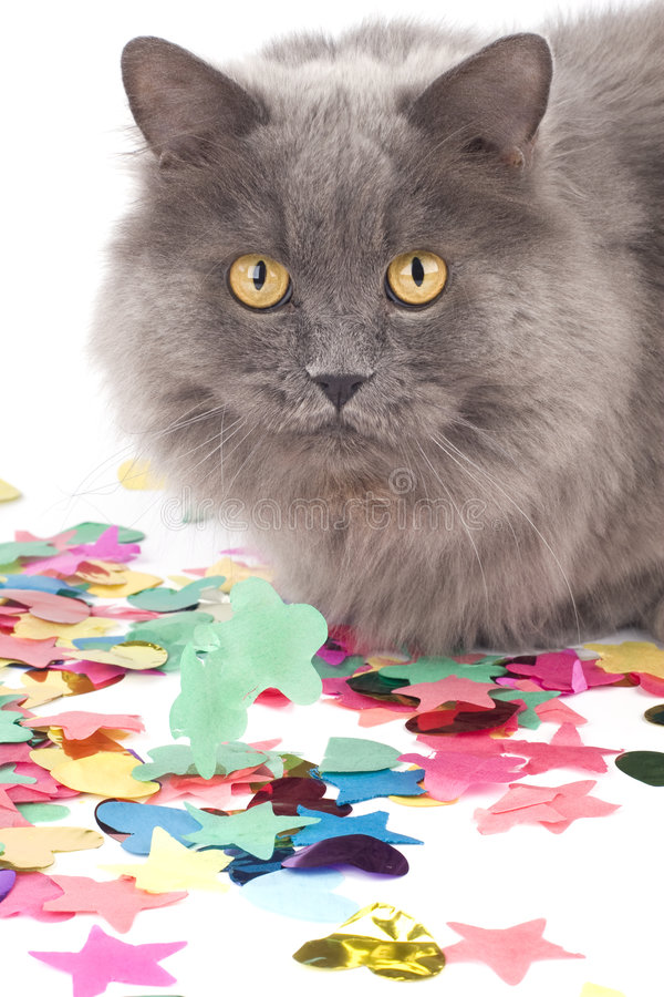 Free Cat With Coloured Decoration For Party Stock Photography - 8692872