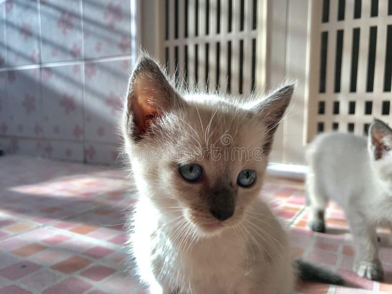 Cat woman stock photos