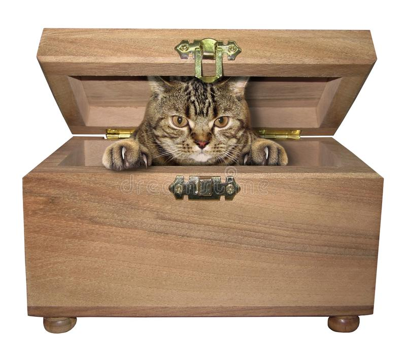 Cat in the wooden box stock photo