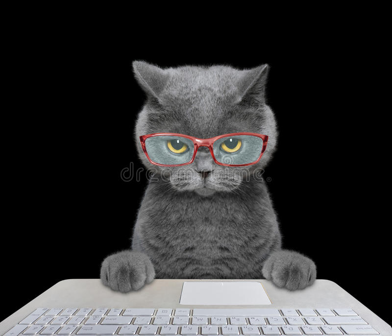 Cat working on the computer. Isolated on black background stock photos