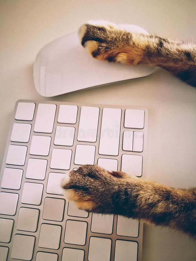 Cat Working With Computer Keyboard And Mouse royalty free stock photos