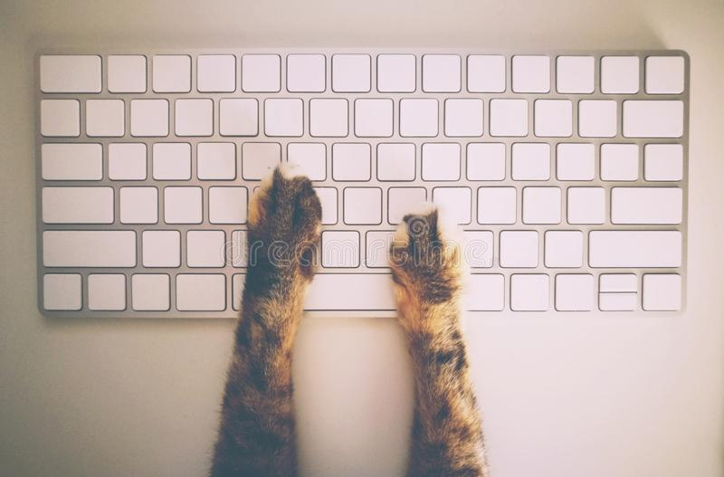 Cat Working With Computer Keyboard och mus arkivbilder