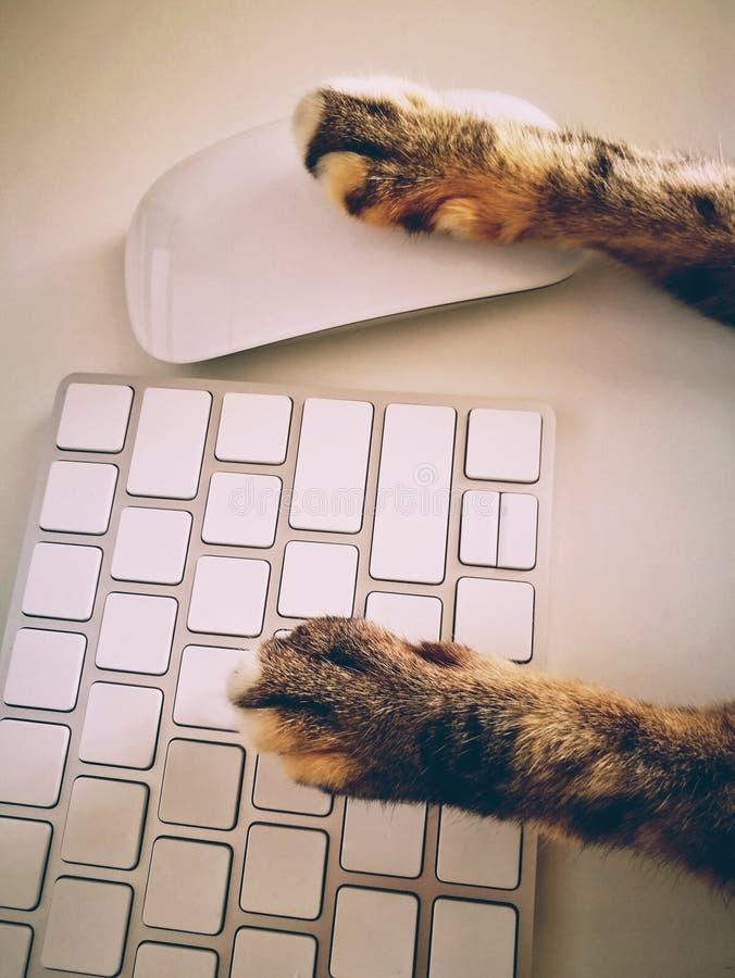 Cat Working With Computer Keyboard y ratón fotos de archivo libres de regalías