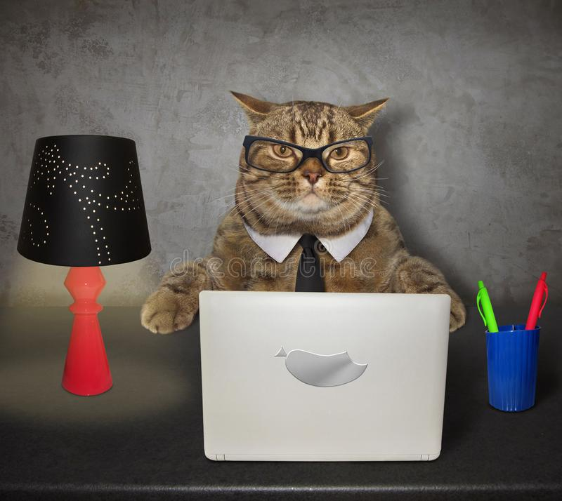 Cat works on the computer. The smart cat in glasses works on his computer at the desk royalty free stock image