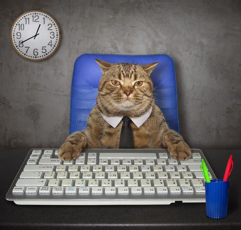 Free Cat Works In The Office 2 Stock Image - 158873811