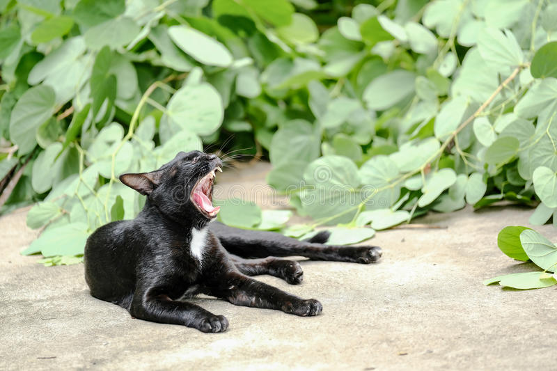 Cat Yawn And Relax On noire le plancher photo stock
