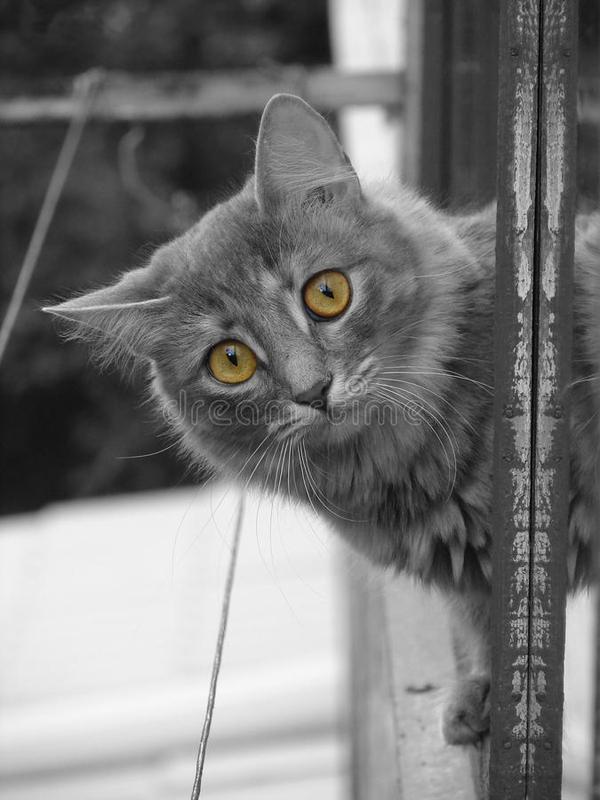 Cat with yellow eyes stock photos