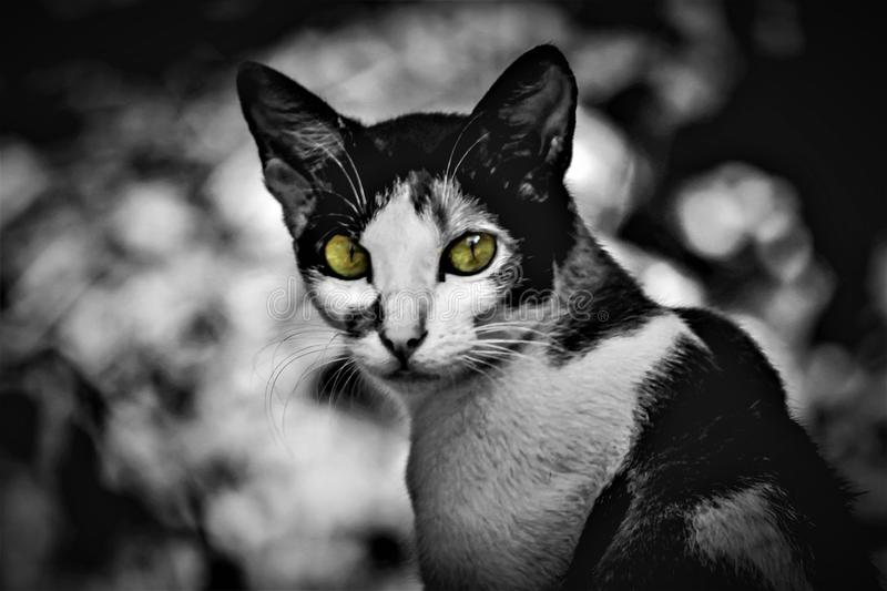 Cat with yellow eyes color splash stock photography