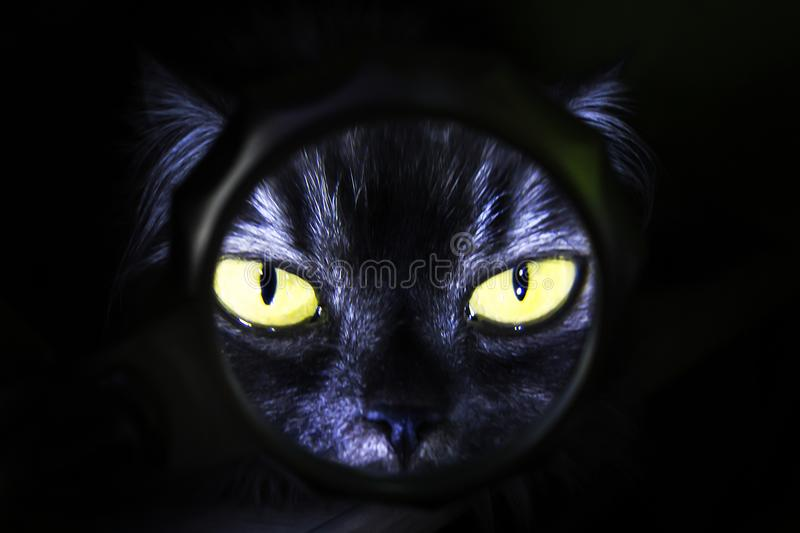 Cat with yellow eyes on black background, magnifying glass stock image
