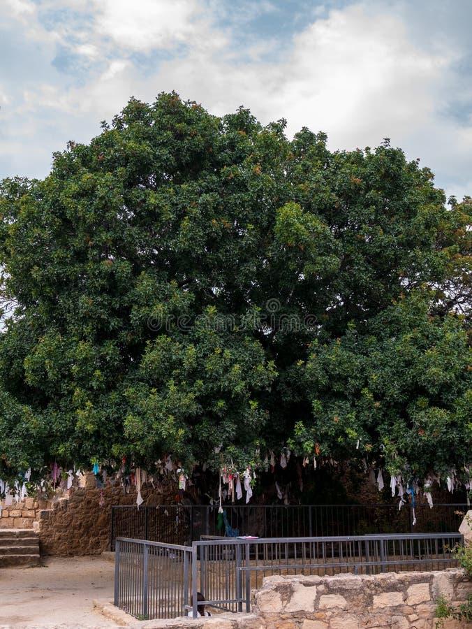 Catacumba de Agia Solomoni fotografia de stock