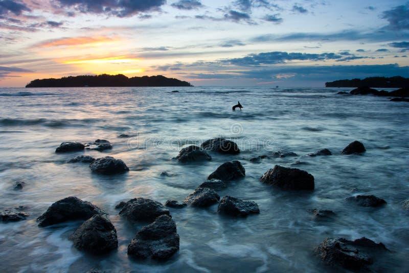 catalina isla santa fotografering för bildbyråer