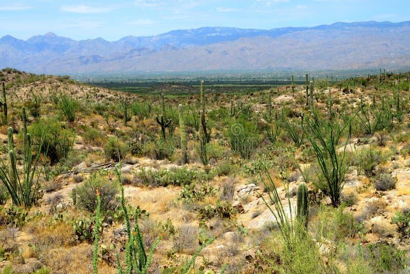 Catalina ountains Sonora Desert Arizona. Catalina Mountains in the Sonora desert in central Arizona USA royalty free stock image