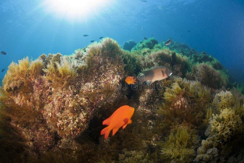 Catalina Reef stock photo