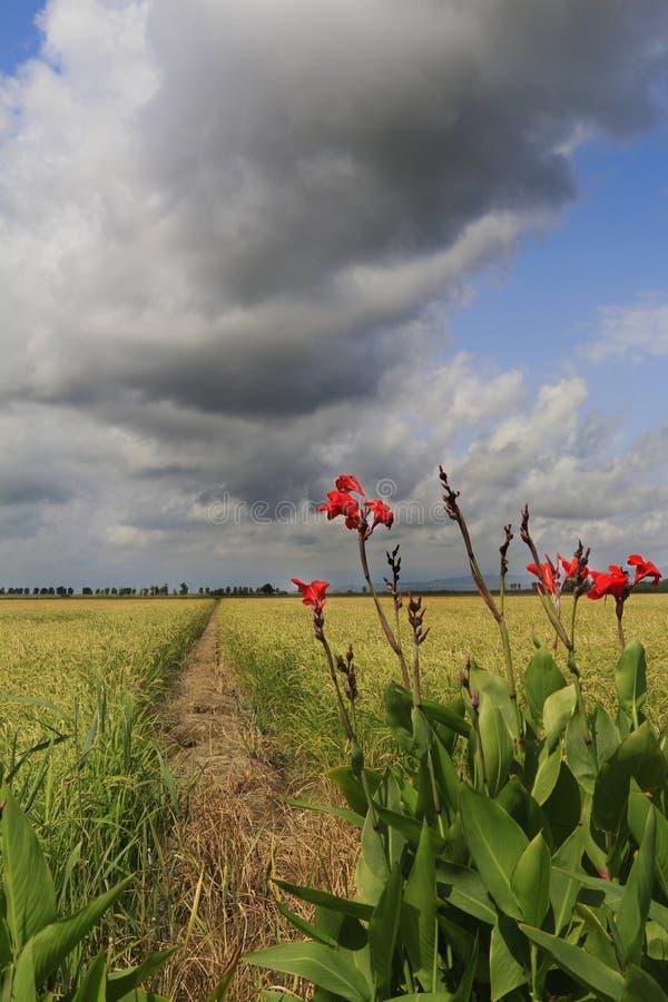 Catalonia, Spanien natur och landskap Europa lopp wanderlust arkivfoton