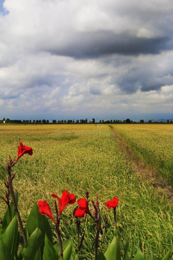 Catalonia, Spanien natur och landskap Europa lopp wanderlust royaltyfria foton