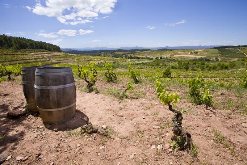 catalonia vingård royaltyfri foto