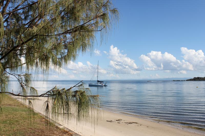 Catamaran Sail Boat in Harbor seen from beach with pine tree in foreground stock photos