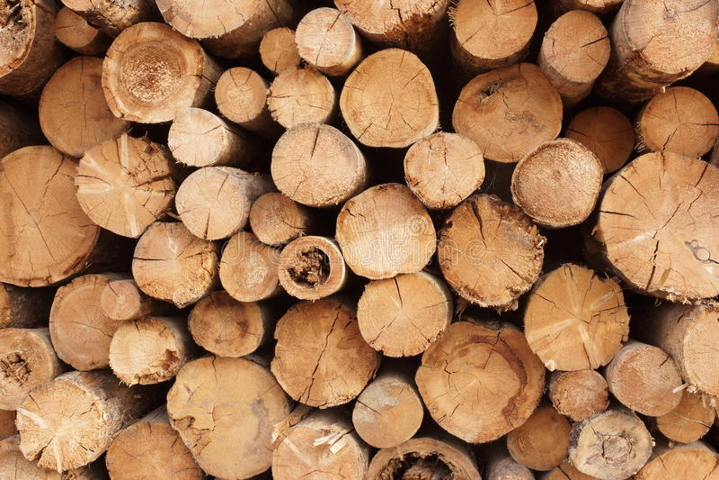Catasta di legna degli alberi tagliati nel lumberyard fotografia stock