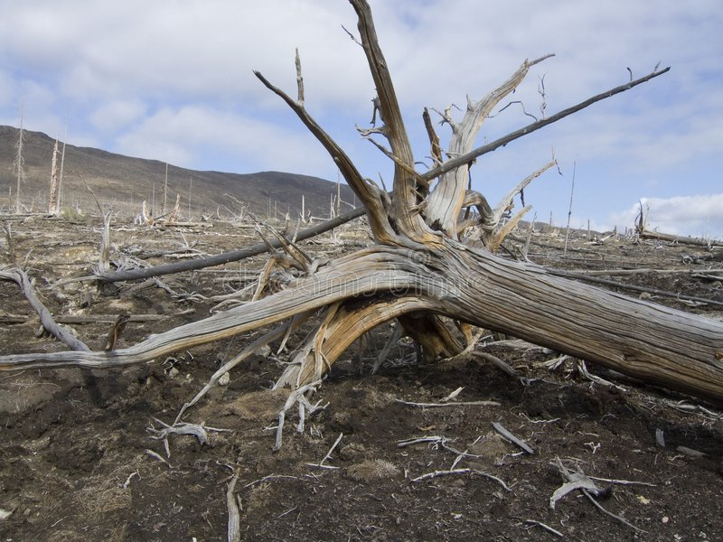 Catastrophe écologique image stock