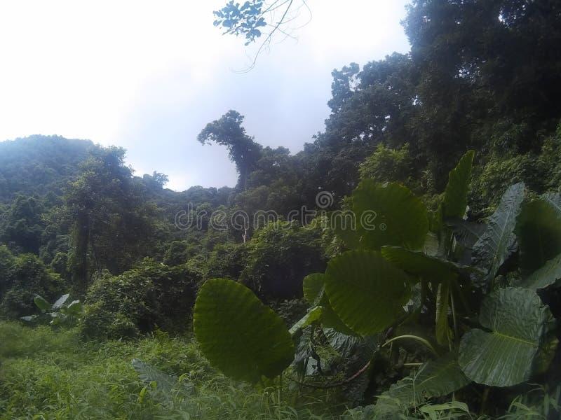 Catba Wyspa zdjęcie stock