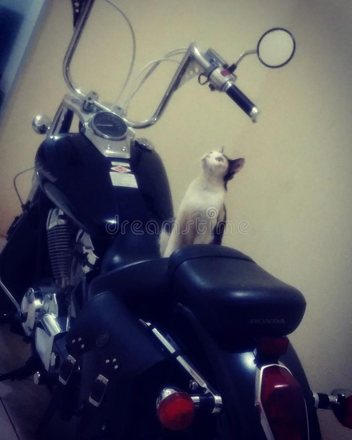 Catbike images stock