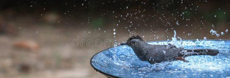 Catbird дует пузыри стоковые фотографии rf