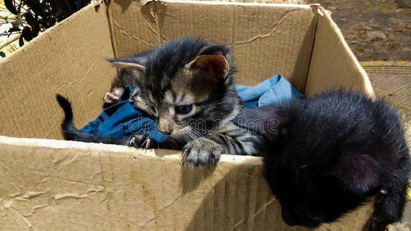 Catbox 库存照片